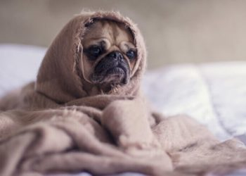 5 Short Films Featuring Man's Best Friend DOG! - Indie Shorts Mag